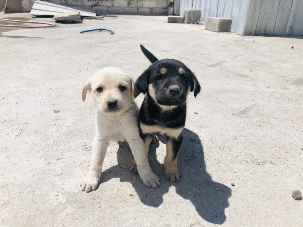Adopción de Perros en Riobamba