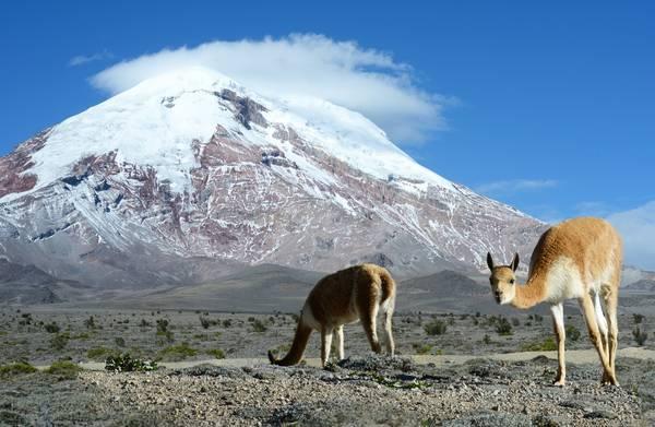 Zonal de Ambiente está en Tungurahua. https://laprensa.com.ec