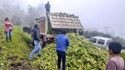 Alimento para el ganado Chimborazo