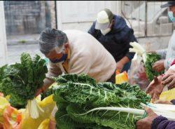 Productos orgánicos Chimborazo