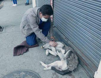 maltrato a perros en Riobamba