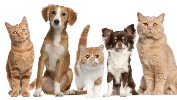 ¿comprar o adoptar mascotas?